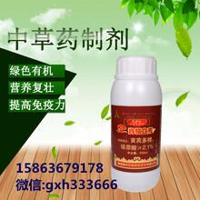 沃柑灌根用药防治黄叶病根部病害图片