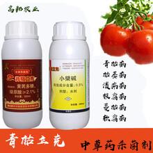 土豆馬鈴署瘡痂病疫病防治青枯立克圖片