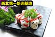 壽司學習地方日本壽司紫菜包飯做法培訓
