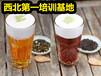 發酵茶飲品培訓班西安發酵茶輕食沙拉技術學習