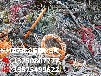 萧山收购手机通讯设备回收,萧山报废手机线路板回收价格