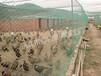 养殖网养殖围网养鸡围网批发