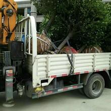 拉树吊车多少钱3吨吊树小随车吊价格合理济宁三石