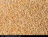卫世养殖公司求购玉米高粱大米小麦