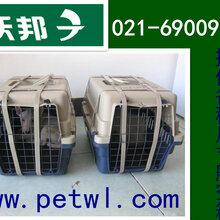 上海宠物托运需要多少钱图片