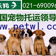 上海虹桥机场宠物航空托运价格浦东机场宠物空运流程