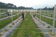 梧州岑溪苍梧滴灌喷灌节水灌溉水肥一体化