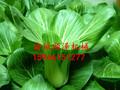 蔬菜加工线净菜清洗机水果蔬菜清洗设备清洗设备蔬菜清洗机图片
