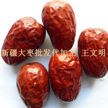 樂陵果豐新疆紅棗批發廠家圖片