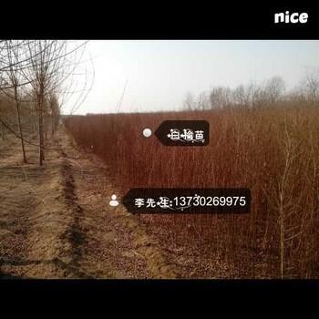 中国仲盛苗木有限公司