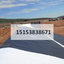 两布一膜菏泽检测方法/土工织物菏泽施工指导/土工布生产厂家总代直销图片