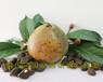 大果红花油茶种植基地发展历程红花大果油茶树苗价格及图片
