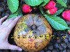 广西藤县大果红花油茶种植要求大红花油茶树苗价格原产地批发