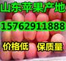 美八苹果价格,山东苹果产地批发价格图片