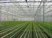 鋼結構溫室大棚