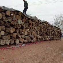 西安批發老榆木板材,直拼板圖片