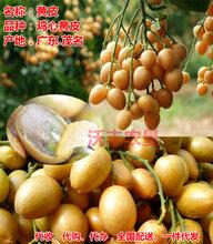 鸡心黄皮果供应产地代收代购经纪代办一件代发全国配送--广东茂名市电白产区图片
