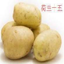 求购胡萝卜马铃薯土豆图片