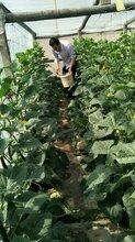 青储饲料发酵剂有机物料腐熟菌剂微生物制剂山东有机肥厂推荐的厂家