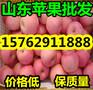 山东红星苹果批发价格山东苹果产地便宜图片