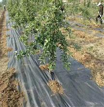 供应新疆1.2米果园生态可降解防草布图片
