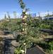 內蒙古防草布-果園覆蓋保濕透氣抗老化