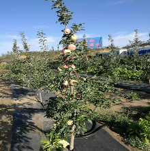 内蒙古防草布-果园覆盖保湿透气抗老化图片