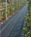 新余果园防草布厂家