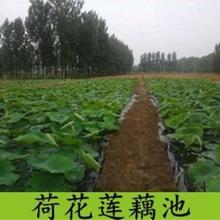 贵港水产养殖防渗膜供应厂家图片