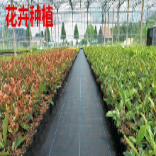 供應安陽農用地布-實力廠家-果園防草布品質保證圖片