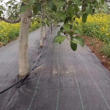 供應甘肅園林果樹覆蓋防草地布透水透氣抗暴曬圖片
