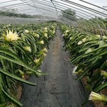 啟東市生態園蓋草布供應廠家圖片
