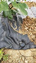 園林茶園覆蓋除草地布供應福建90g防草地布價格圖片