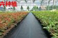 新料pp地布編織園林果園防草布覆蓋雜草可以使用超長時間