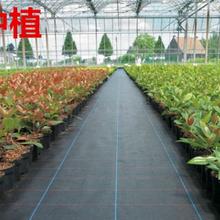 重慶九龍坡園藝蓋草布透水保濕有效阻止雜草生長圖片
