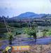 福建武夷山果园遮草布透水保湿有效阻止杂草生长