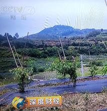福建武夷山果園遮草布透水保濕有效阻止雜草生長圖片