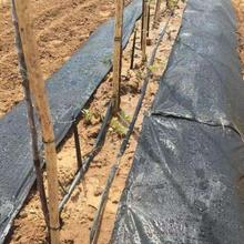 大連果園編織防草布一畝地新報價圖片
