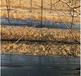 黑色編織防草布廠家供應蓋草布園藝地布果園除草布保濕防蟲害