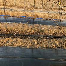 黑色編織防草布廠家供應蓋草布園藝地布果園除草布保濕防蟲害圖片