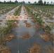 新疆北屯生態園蓋草布透水保濕有效阻止雜草生長