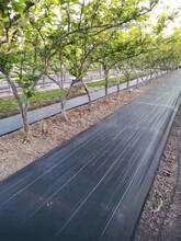 上海靜安園藝蓋草布透水保濕有效阻止雜草生長圖片