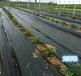 武夷山防草布價格黑色編織4米果園除草地布