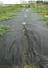 果園防草布除草布透水透氣除草布抗老化使用年限久