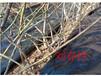 pp編織防草地布用于果園園藝苗圃幅寬6米廠家規格可定制