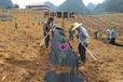 抗氧化pp、pe編織除草布、園藝蓋草布、果園防草地布