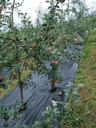拉萨防草地布园艺地布果树除草布耐晒透水