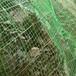 供青海sns边坡防护网和西宁边坡防护网