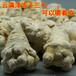 云南凍干三七廠家精選凍干三七20頭30頭價格多少錢一斤