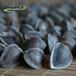 印度辣木籽食用方法及正宗印度辣木籽圖片